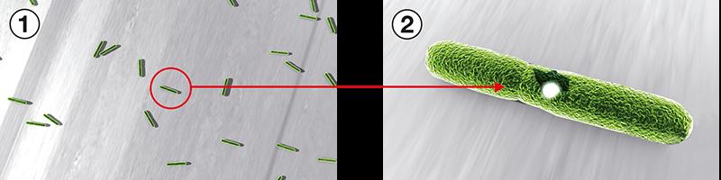 Den antimikrobielle og antibakterielle effektivitet HOPPE SecuSan®