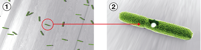 HOPPE SecuSan® – Antimikrobinen vaikuttavuus